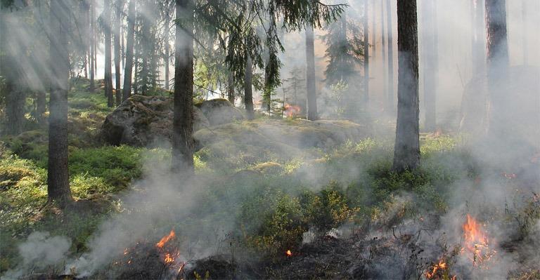 Identificados por incendio florestal
