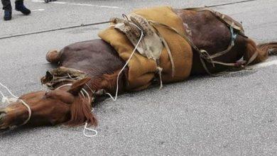 Photo of Cavalo morre após ser levado à exaustão e imagens causam revolta em Viseu