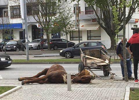 Cavalo morre após ser levado à exaustão e imagens causam revolta em Viseu 1