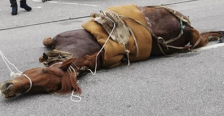 Cavalo é levado à exaustão em Viseu