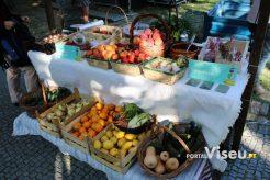 Viseu Sabe Bem   Imagens   Parque Aquilino Ribeiro 52